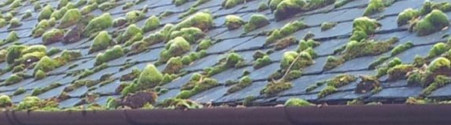 Roof Cleaning in Cardiff, Swansea, South Wales, Bristol