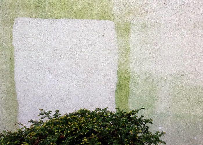 Clean green algae from render – chemicals of heat?